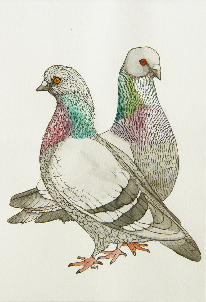 Brothers Pigeon